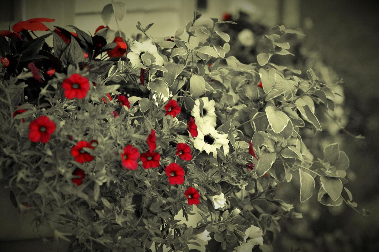 image credit:http://hqwallbase.com/images/bigest/1600x900_bright_red_flowers-1516540.jpg